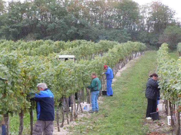 Weinjahr 2020